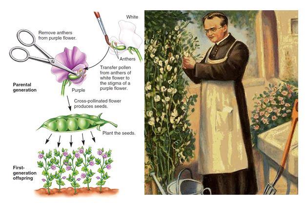 UG19-GENETICS AND PLANT BREEDING-EPJ