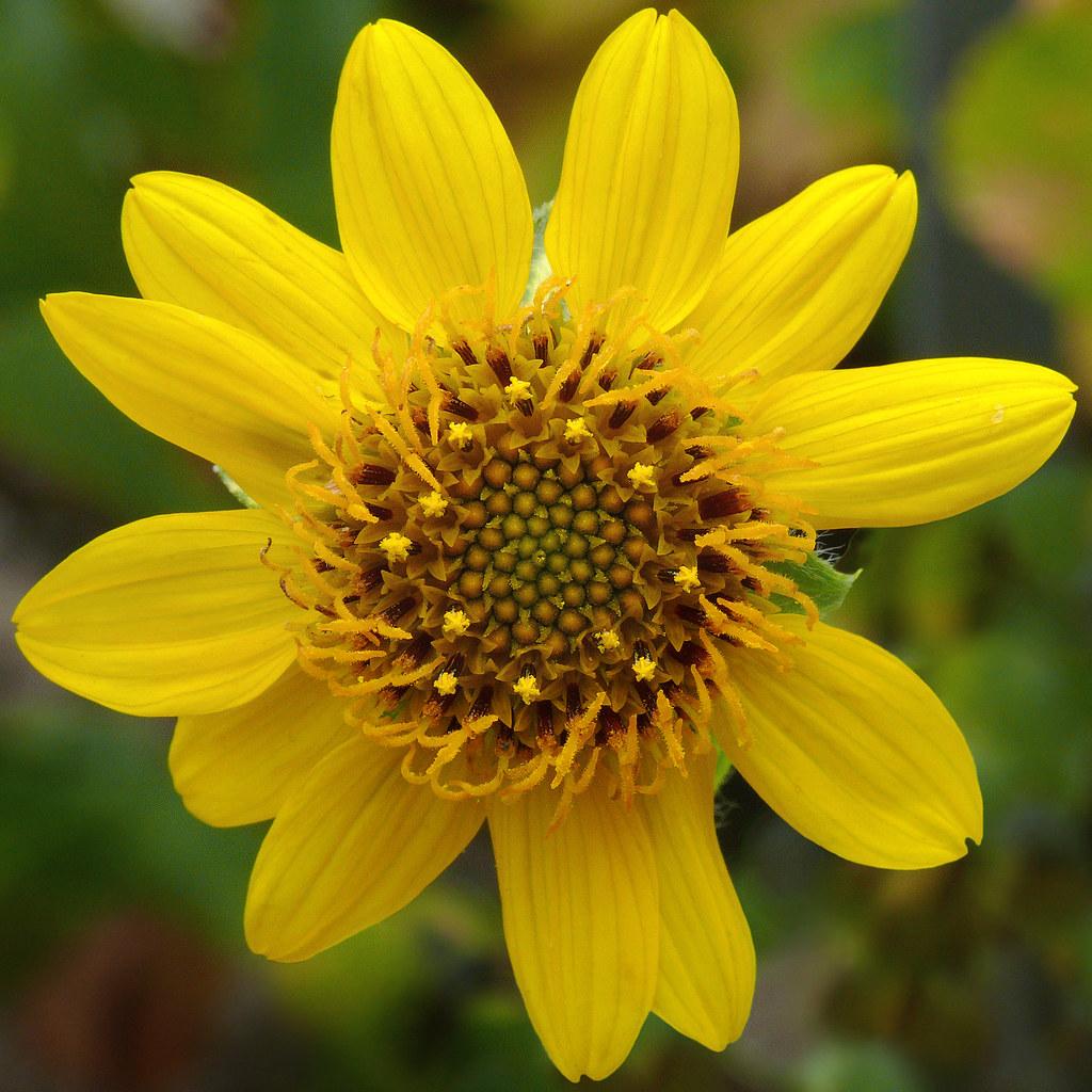 Plant Taxonomy and Economic Botany